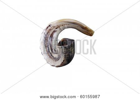 jewish small horn shofar isolated on white background