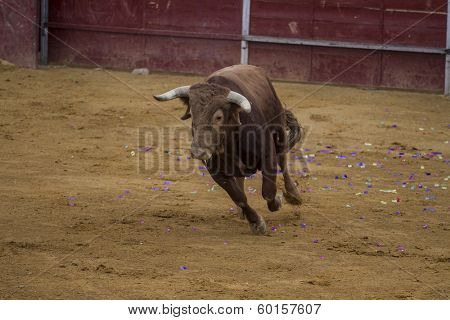 Bullfight in Camarma of Esteruelas, Madrid. 2011. mounted bullfighter, bullfight, typical Spanish.