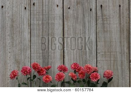 Row of pink flowers border wood fence