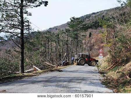 Foresters Clearing Rime Damaged Trees