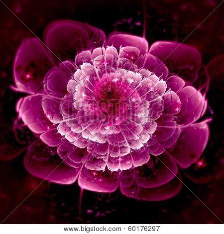 Dark Pink Fractal Flower Pattern