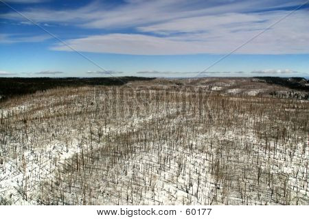 Grand Canyon Post-fire Forest Aerial