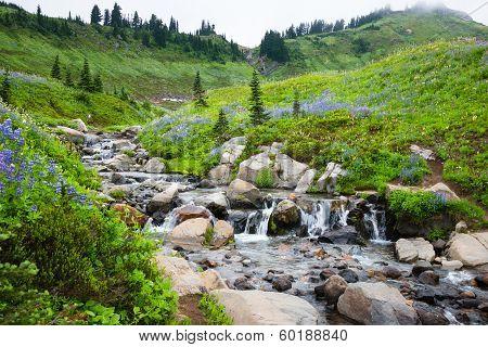 Waterfall Mountain Wildflowers