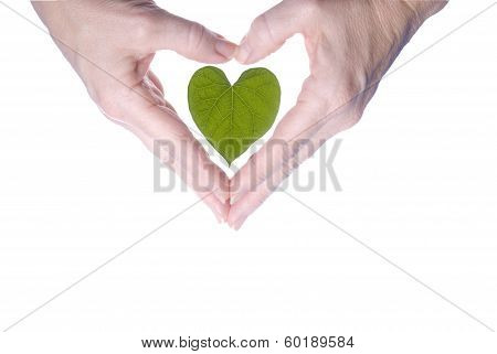 Heart Shaped Leaf Outlined By Woman's Hands