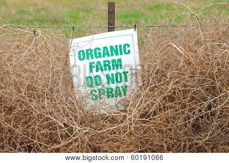 Organic Tumbleweeds