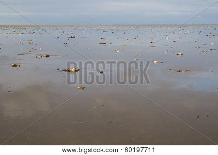 Wadden Sea At Low Tide