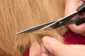 stock photo of split ends  - Stylist cutting split ends of the hair - JPG