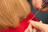 foto of split ends  - Stylist cutting split ends of the hair - JPG