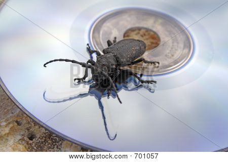 The Black Bug On A Laser Disk
