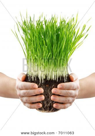 Human Hands Holding Green Grass With Ground