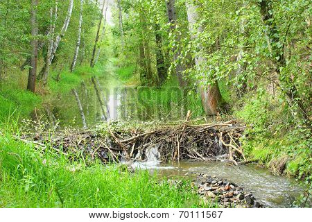 Beaver dam on The Lucni potok (Meadow creek) nearby Pilsen city. Czech Republic, Europe.