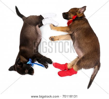 Sleeping puppies dressed in socks isolated on white