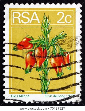 Postage Stamp South Africa 1974 Heather, Flowering Shrub