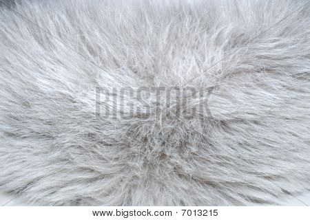 Texture Of White Fur Polar Fox
