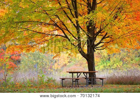 Picnic table under bright color autumn trees