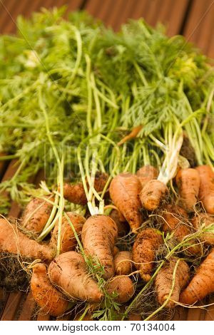 Chanteney Carrots 'Red Cored' with stalks attached -