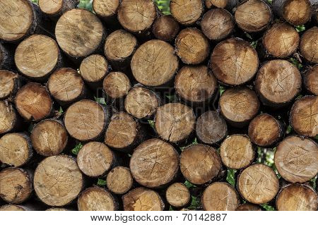 Log woodpile ready for winter