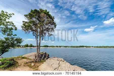 Tree On The Coast Of Connecticut