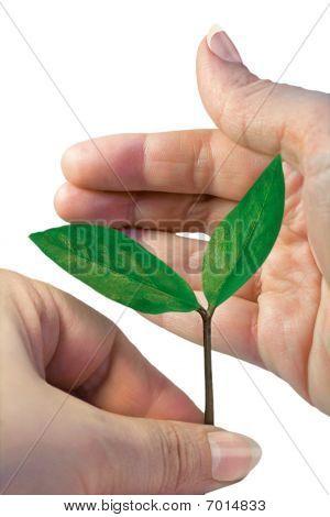 Green Peant Between Hands