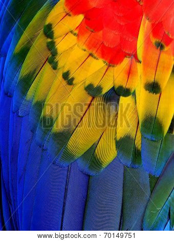 Close Up Of Scarlet Macaw Bird Feathers In Great Details