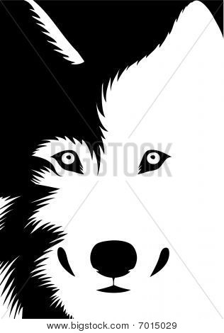Wolf's head. Black and white vector illustration of a wolf looking at us