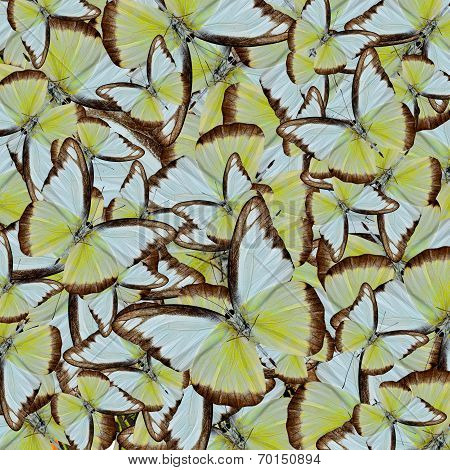 Compilation Of Chocolate Albatross Butterflies In To An Exotic Background Texture
