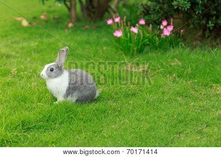 baby Rabbit run on Grass