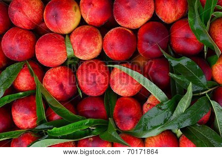 Fresh Peaches Background