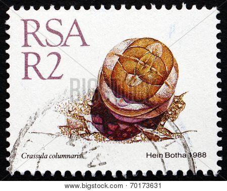 Postage Stamp South Africa 1988 Crassula Columnaris, Succulent Plant