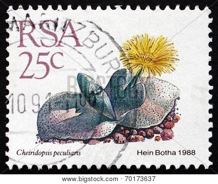 Postage Stamp South Africa 1988 Cheiridopsis Peculiaris, Succulent Plant