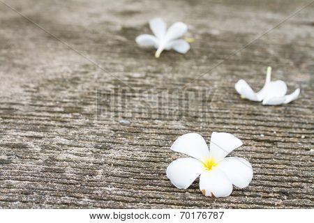 Plumeria flowers drop on the floor