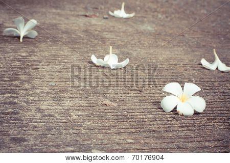 Plumeria drop on cement floor