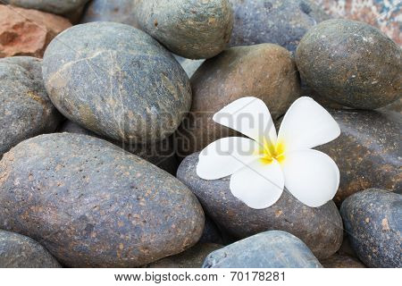 White plumeria flower on stones