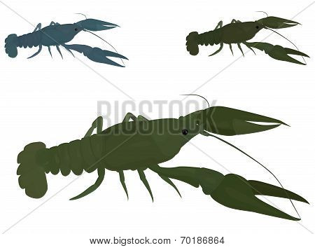 green crayfish