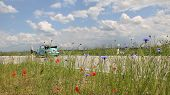 pic of beetle car  - beetle oldtimer on the way country roadside with red poppy and corn flowers - JPG