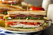 pic of tomato sandwich  - Turkey and Bacon Club Sandwich with Lettuce and Tomato - JPG