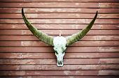 picture of longhorn  - Longhorn Buffalo skull decorated at house wall - JPG