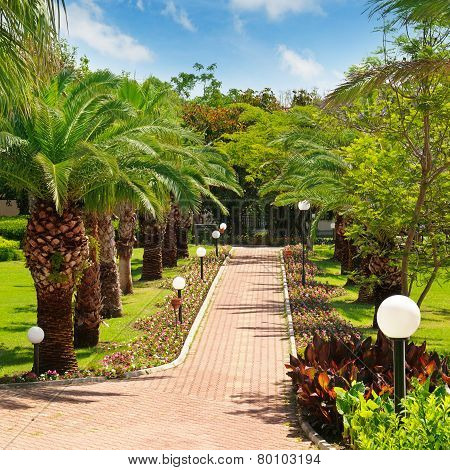 Alley With Tropical Palm Trees And Lawn