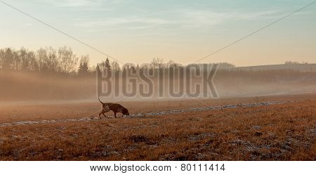 Autumn Landscape With A Hunting Dog.