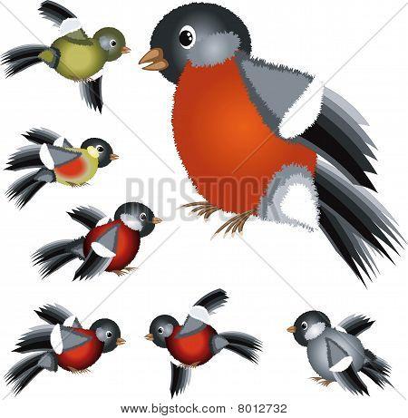 Set of the birds.