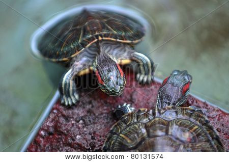 Turtles in Indonesia