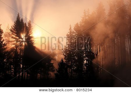 Misty Forest With Sunrise Yellowstone United States.