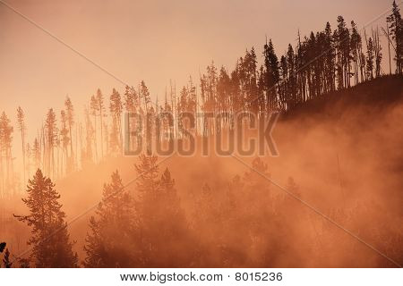 Misty Forest With Sunrise Yellowstone National Park United States.