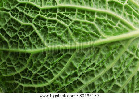 Savoy cabbage, macro view