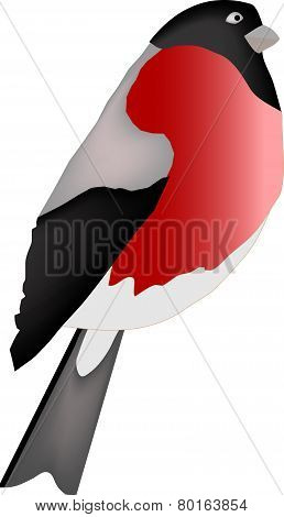 The bird is isolated on a white background. A bullfinch - a vectorial illustration