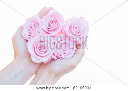 young woman holding pink roses in her hands