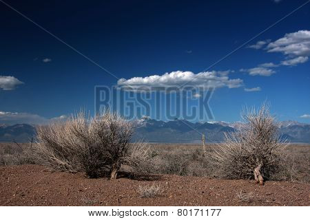 Sage Brush on the High Plains