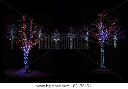 Trees Illuminated At Night