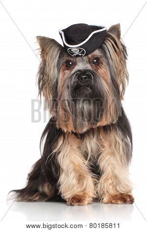 Yorkshire Terrier In Carnival Pirate Hat