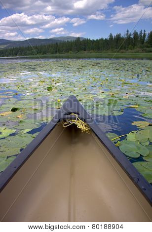Canoe and Blooming Lily Pads